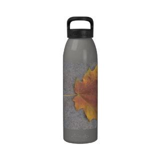 Leaf on a Sidewalk Reusable Water Bottle