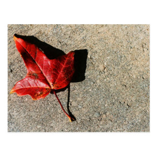 """leaf on concrete"" by Coressel Productions Postcard"