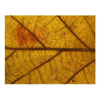 Leaf Postcard