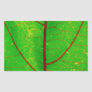 Leaf Rectangular Sticker