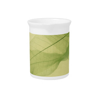 leaf skeleton shadows pitcher