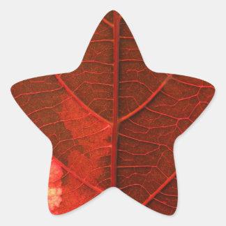 Leaf Star Sticker