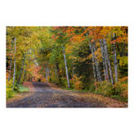 Leaf Strewn Gravel Road With Autumn Color Poster