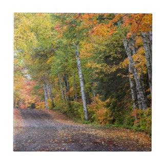 Leaf Strewn Gravel Road With Autumn Color Tile