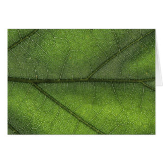 Leaf Structure Macro Photography Card