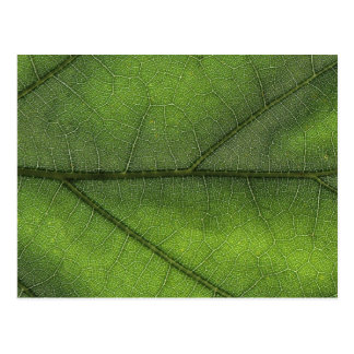 Leaf Structure Macro Photography Postcard
