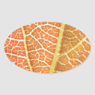 Leaf Veins Oval Sticker