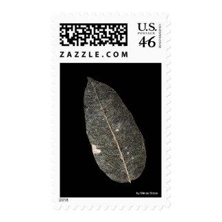 Leaf venation stamp