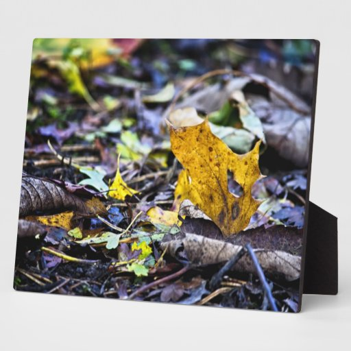Leaf with a Heart Photo Plaques