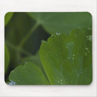 leaf-with-dew-and-spots-2012-05-26 mouse pad