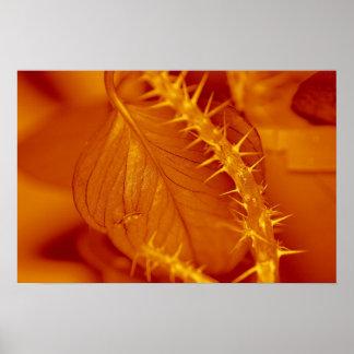 leaf with thorns print