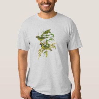 Leafbird De oro-afrontado (aurifrons de Playera