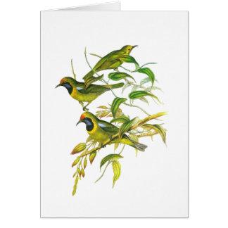 Leafbird De oro-afrontado Tarjeta De Felicitación