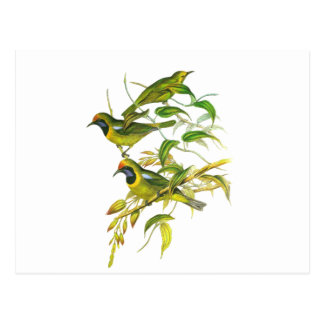 Leafbird De oro-afrontado Postal