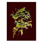 Leafbird De oro-afrontado Tarjeta Postal