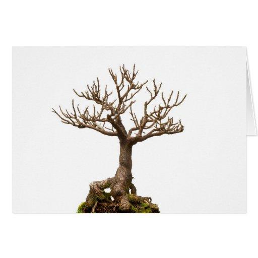 Leafless bonsai plant greeting card