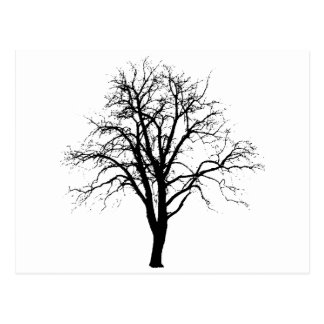 Leafless Tree In Winter Silhouette Postcard