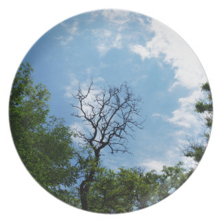 Leafless tree of acacia dinner plate