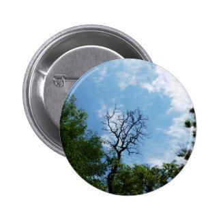 Leafless tree of acacia pinback button