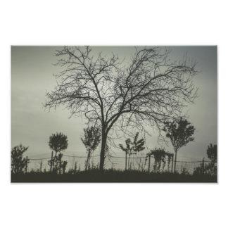 Leafless tree photo