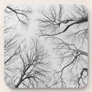 Leafless Trees in Thiepval Wood Beverage Coaster