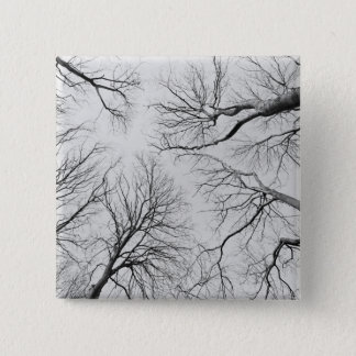 Leafless Trees in Thiepval Wood Button