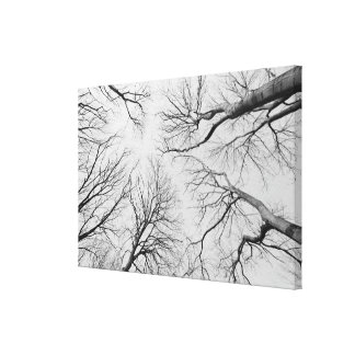 Leafless Trees in Thiepval Wood Canvas Print