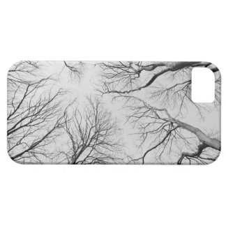 Leafless Trees in Thiepval Wood iPhone 5 Cases