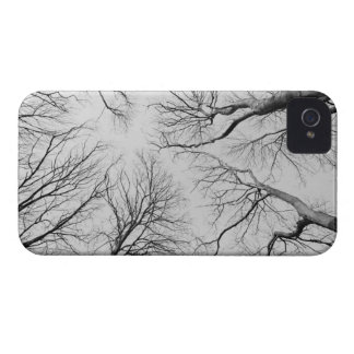 Leafless Trees in Thiepval Wood iPhone 4 Case