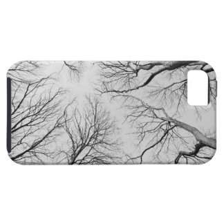 Leafless Trees in Thiepval Wood iPhone SE/5/5s Case