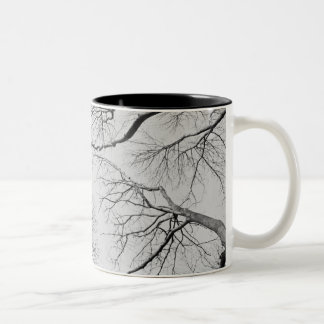Leafless Trees in Thiepval Wood Coffee Mugs
