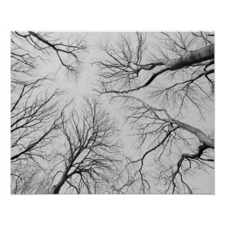 Leafless Trees in Thiepval Wood Print