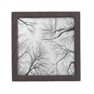 Leafless Trees in Thiepval Wood Premium Jewelry Boxes