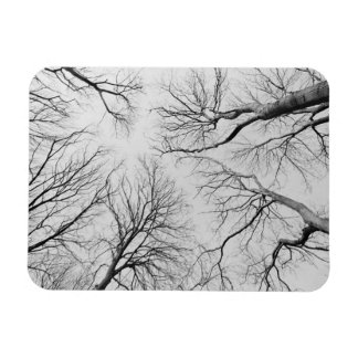 Leafless Trees in Thiepval Wood Flexible Magnets