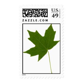 LeafScan_v2 Postage Stamp