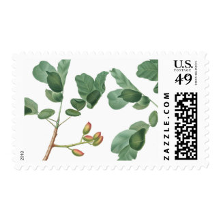 Leafy Botanical Vintage Illustration Postage Stamp