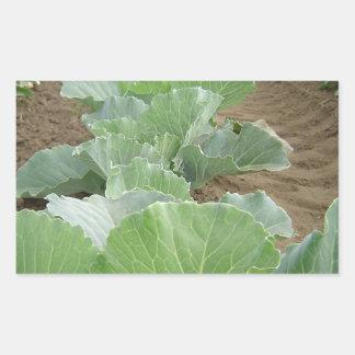 Leafy Greens, Farming Rectangular Sticker