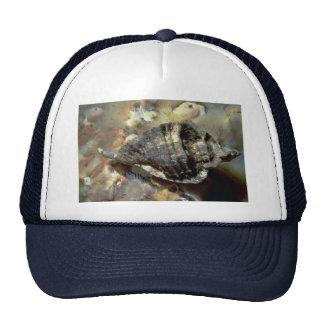 Leafy hornmouth (Ceretostoma foliatum) Shell Trucker Hat