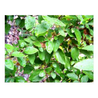leafy postcard