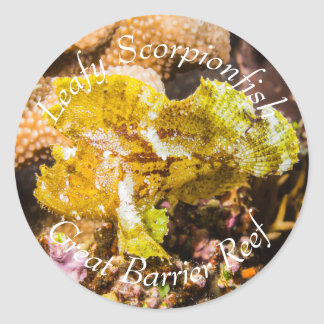 Leafy Scorpionfish on the Great Barrier Reef Classic Round Sticker