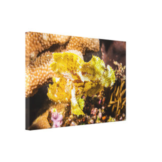 Leafy Scorpionfish Wrapped Canvas