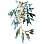 "Leafy Sea Dragon Cutout Magnet/Sculpture<br><div class=""desc"">The leafy sea dragon is a marine fish related to the seahorse. The name is derived from the appearance, with long leaf-like protrusions coming from all over the body. These protrusions are not used for propulsion; they serve only as camouflage. The leafy sea dragon propels itself by means of a...</div>"