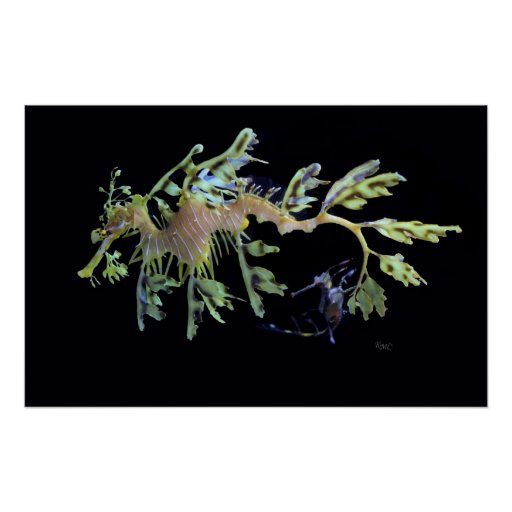 Leafy Sea Dragon & Weedy Seadragon Poster