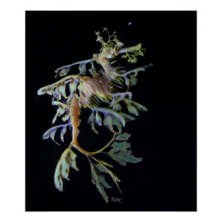 Leafy Seadragon & Mysid Shrimp Poster