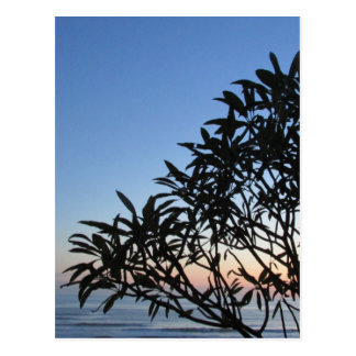 leafy silhouette postcard