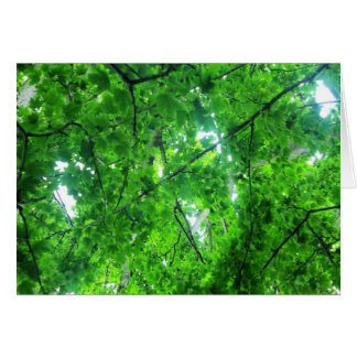 Leafy Tree Greeting Cards