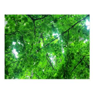 Leafy Tree Post Card