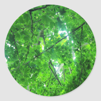 Leafy Tree Stickers