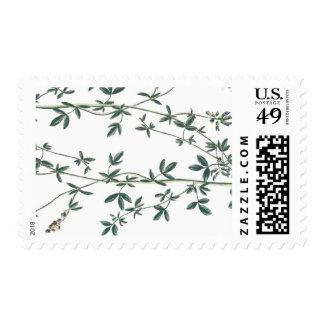 Leafy Vine Botanical Print Postage Stamp