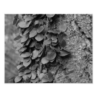Leafy Vine On Tree In Black White Nature Poster